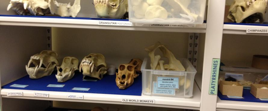 The Collections Room houses various specimens for scientific study.