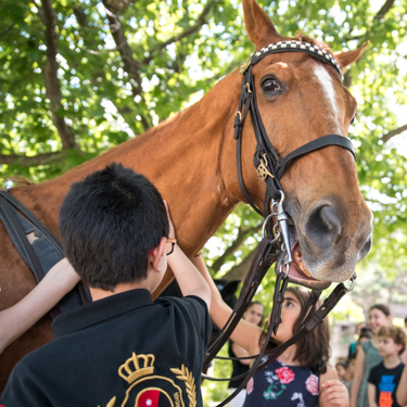 students meet a horse from the Chicago Police Department's Mounted Unit