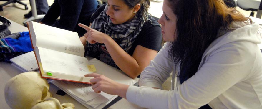 Biological anthropology students work with bones in hands-on labs.