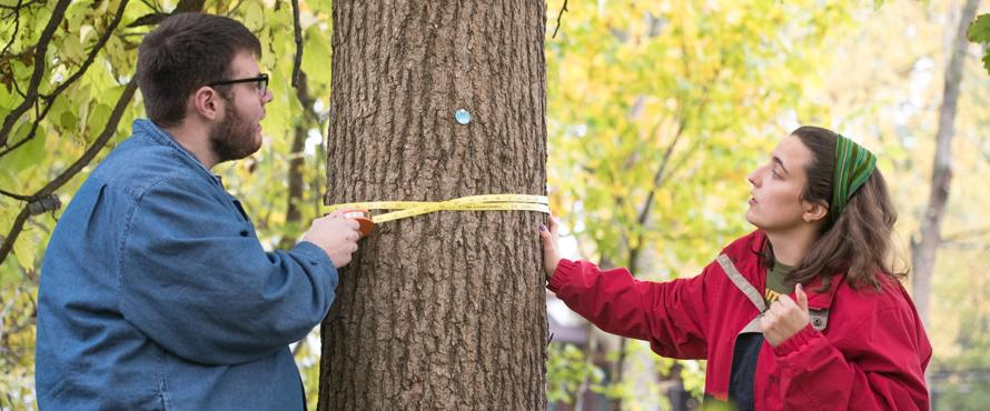Two students use a measure to check the circumference of a tree.